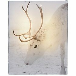 LED Obraz na plátne Animal and snow White Reindeer, 20 x 25 cm