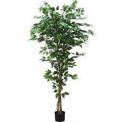 Umelá Rastlina Ficus Ii V: 180cm